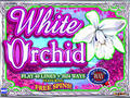 Jeu White Orchid